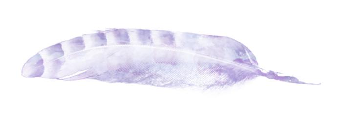 a spacious feather